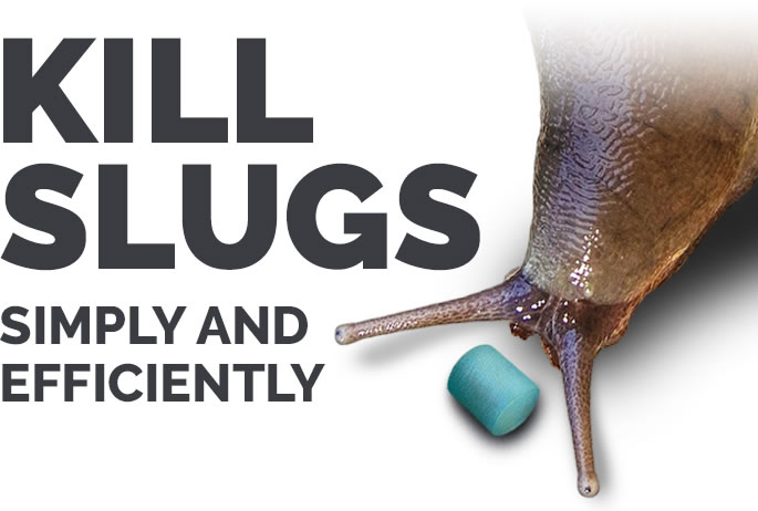 Kill slugs simply and efficiently